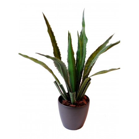 agave-large
